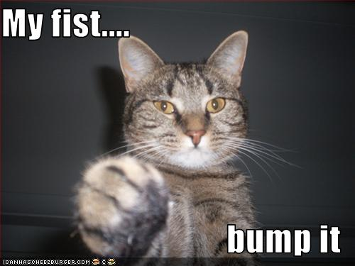 Post Funny Stuff - Page 3 Cat-fist-bump-it